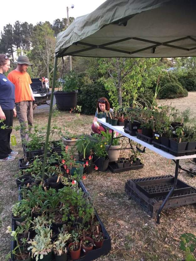 setting up the plant sale, april 2018
